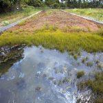 The Tragedy of Hazmat Soil Contamination | Harbor Environmental Group